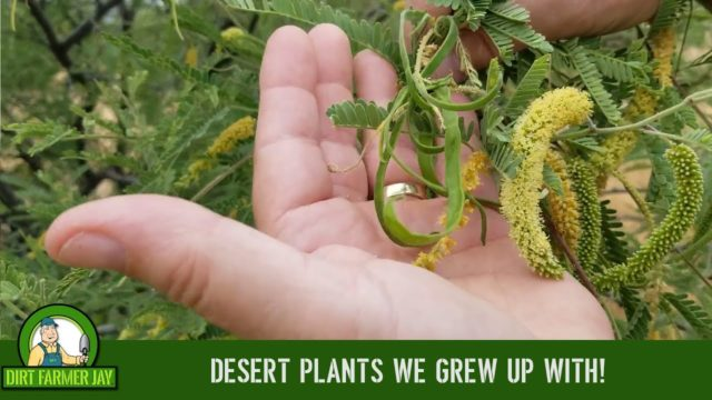 Desert Plants We Grew Up With!
