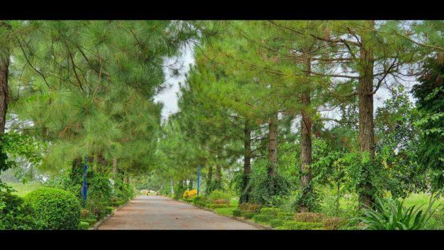 The Phoenix Garden một vòng quanh khu đô thị Đà lạt trong lòng Hà Nội