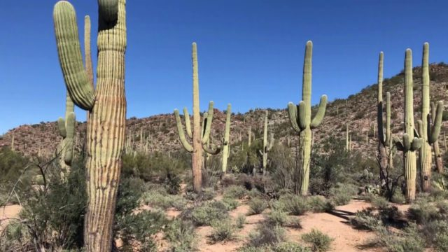 The Arizona Sonoran Desert … LET'S EXPLORE!
