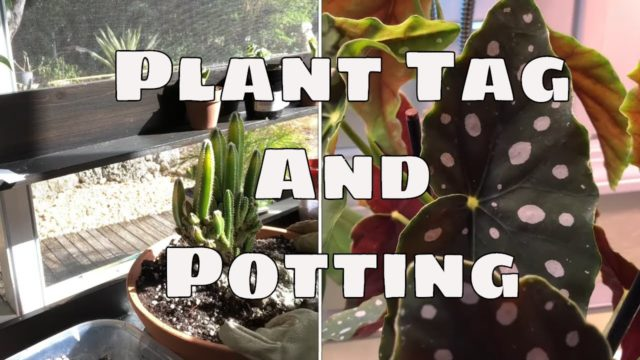 Houseplant Tag / Plant Potting  / Plant Questions Answers tagged by @Suzette's Garden