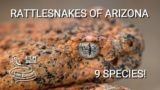 Rattlesnakes of Arizona – 9 species of venomous pit vipers from Sonoran desert