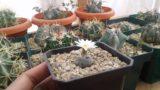 Mi colección de cactus – by Desert plants