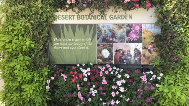 Desert Botanical Garden Phoenix Arizona USA