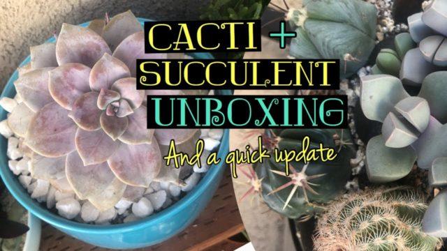 Cacti & Succulent Unboxing + Updates