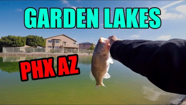 Urban Assault: Garden Lakes PHOENIX AZ