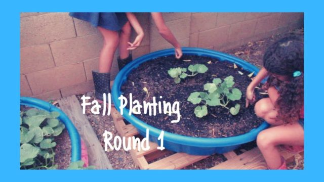 Fall Planting Round 1 for our Fall Desert Garden Zone 9b Wk 22