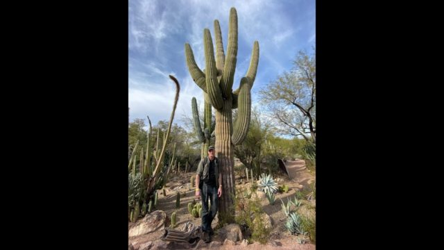 The World Class Phoenix Desert Botanical Garden—50,000 Cacti and More!