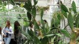 Ogród Botaniczny w Krakowie – rośliny pustynne / The Botanical Garden in Cracow – Desert Plansts