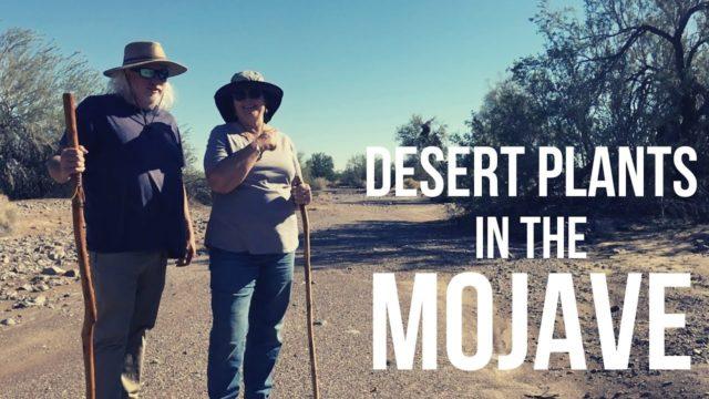 Desert Plants: A Desert Hike in California's Mojave Desert – Nomad Lifestyle