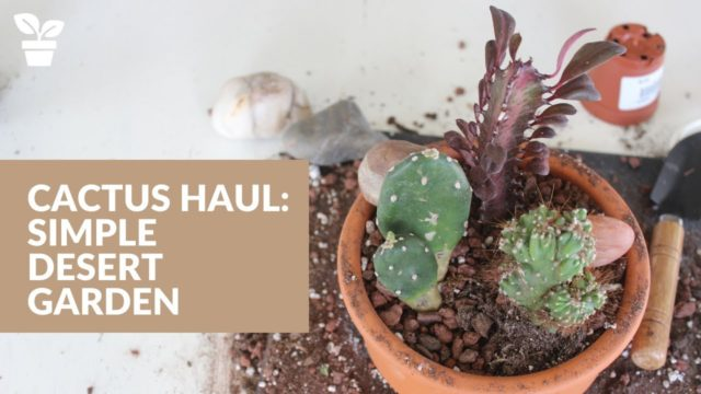 Cactus Garden: Simple Desert Landscape