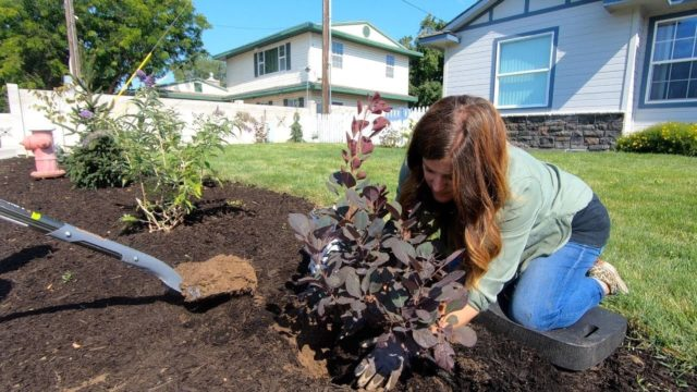 Landscape Makeover Pt 5: Looking at Rocks and Planting More Shrubs 🌿// Garden Answer