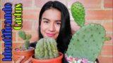 9 CACTUS IDENTIFICADOS + nombres + cuidados básicos 👩🏽🌾 | Jardines By Angie