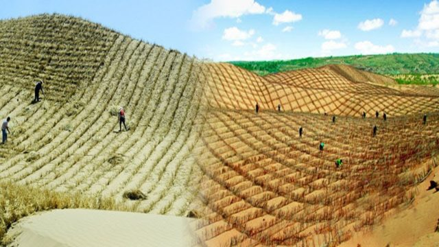 Very Innovative Ways Of Planting In The Desert And Dry Lands