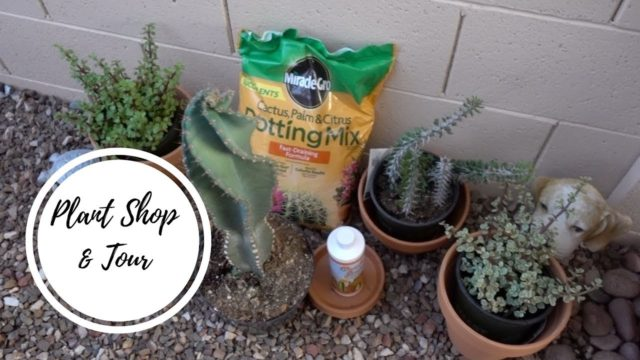 Cactus Shopping & Plant Haul | Arizona Home Depot