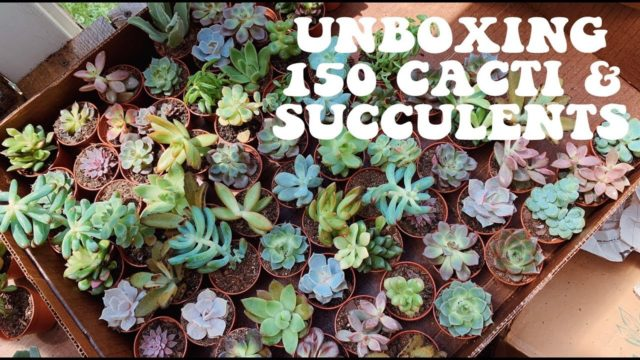 Unboxing 150 Cacti and Succulents