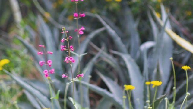 Desert Botanical Garden in Bloom – Spring 2020