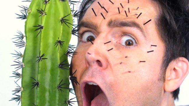 Cactus In Face!