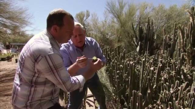 Arizona Cactus Farm – America's Heartland