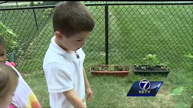 Children grow garden in school's playground