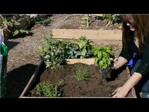 From Garden to Table : Children's Gardening Activities