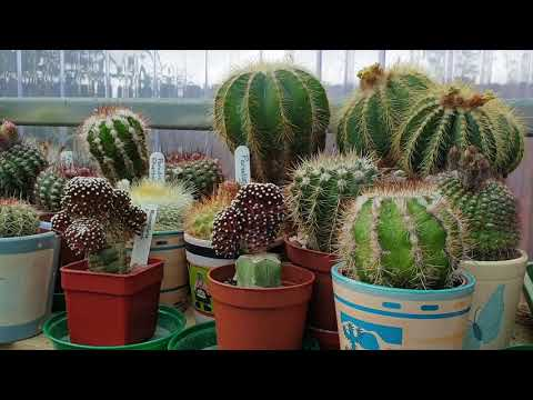 My end of May / start of June 2019 cacti and succulent update.