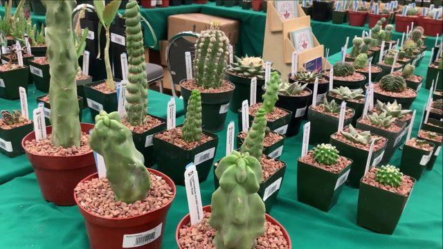OC Cactus & Succulent Show 2019!