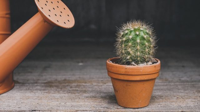 HOW TO REPOT A CACTUS LIKE A PRO? | CHOOSING A RIGHT POT