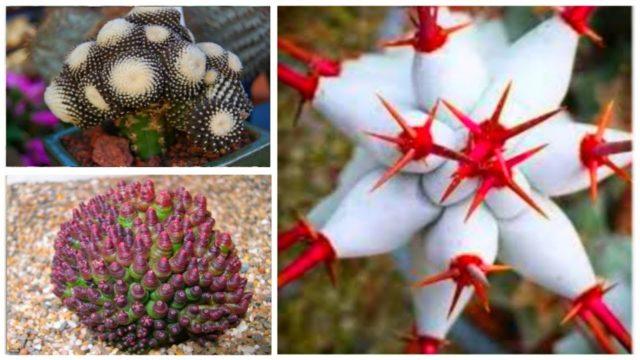 30 Most Rare Cactus