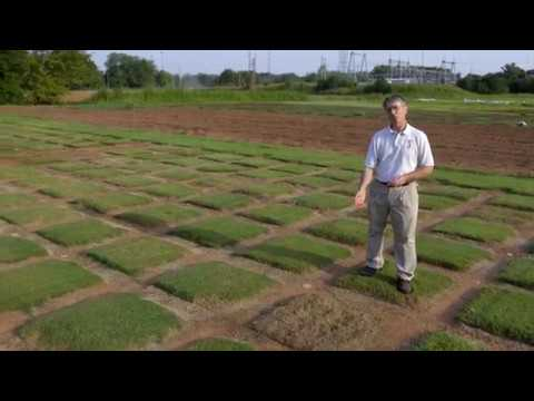 Bermuda Grass Drought Trial