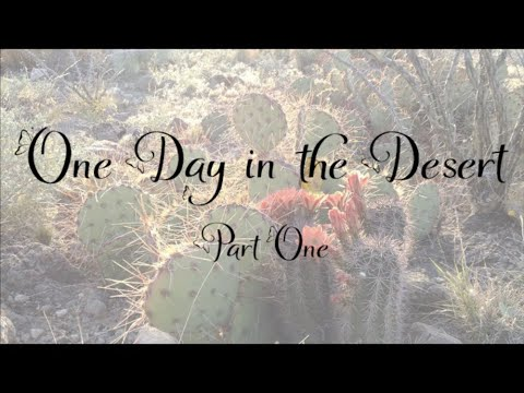 One Day in the Desert Part 1: Introduction to the Chihuahuan Desert
