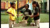 Teaching Gardens