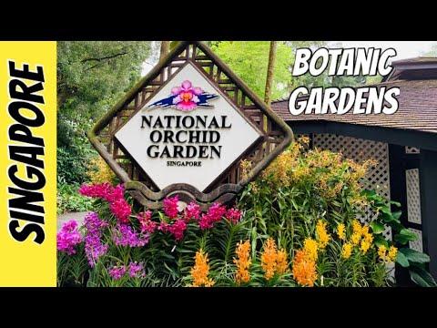 SINGAPORE BOTANIC GARDENS | NATIONAL ORCHID GARDEN 2020
