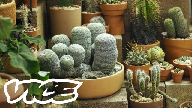 This Store Wants to Make Sure Your Cacti Are Responsibly Sourced and Respectfully Cared For