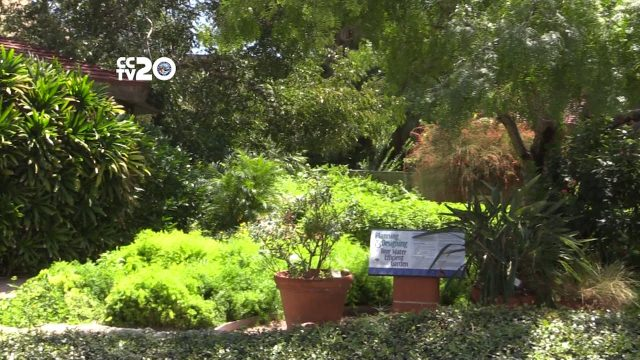 Xeriscape Gardening a Water-Smart Alternative