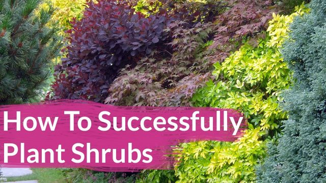 How To Successfully Plant Shrubs In The Garden / Joy Us Garden