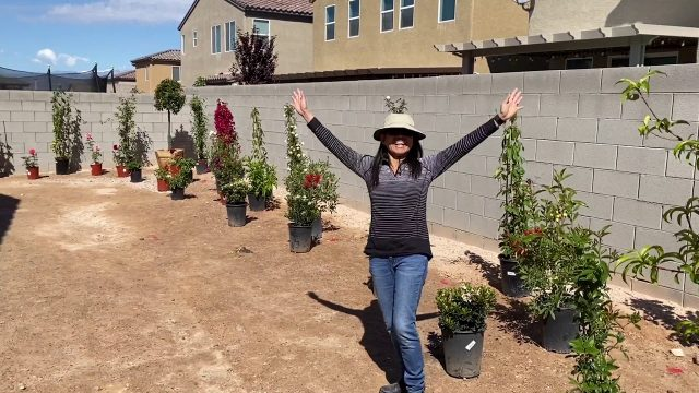 Las Vegas, Backyard – Desert Landscaping