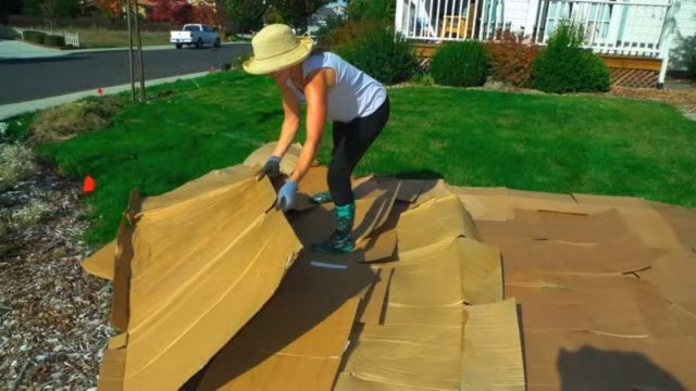 Convert Your Lawn by Sheet Mulching