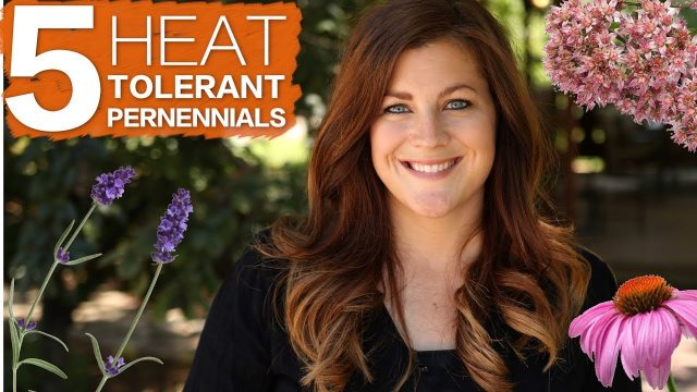 5 Heat Tolerant Perennials 🔥☀️🌿 // Garden Answer