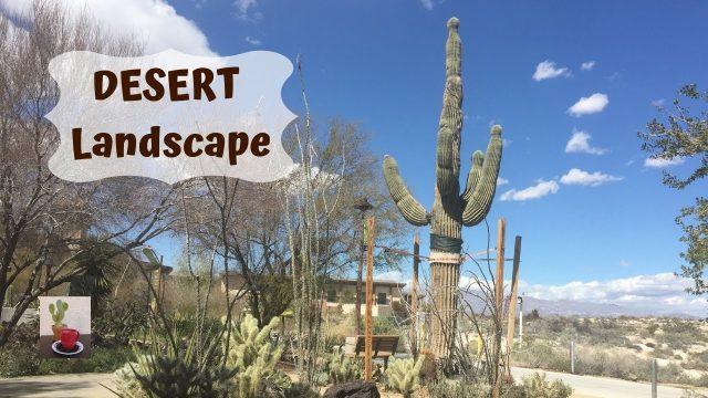 Springs Preserve Desert Garden (part 1)/Plants of the Mojave Desert