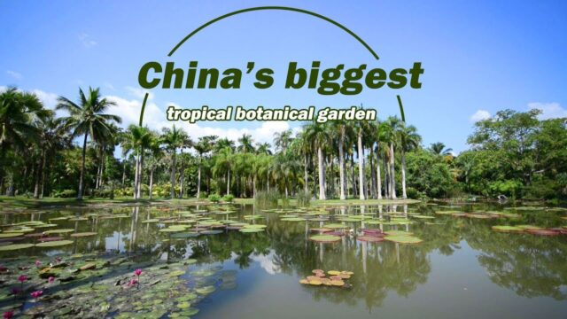 Live: China's biggest tropical botanical garden 探访西双版纳热带植物园