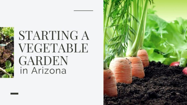 Starting a Vegetable Garden in Arizona