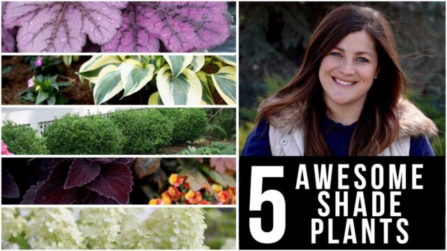 5 Awesome Plants for Shade! 🌿🌥👍 // Garden Answer