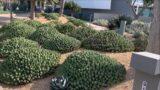 Newport Center Palm & Desert Garden Tour May 2020