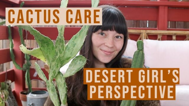 Cactus Care from a Desert Girl's Perspective | Plant Care