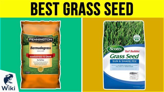 10 Best Grass Seed 2019