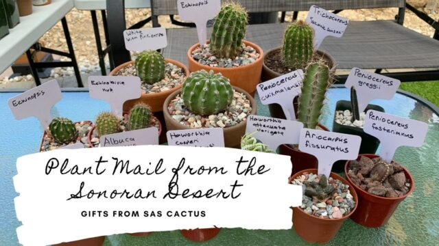 Plant Mail from the Sonoran Desert | Sas Cactus