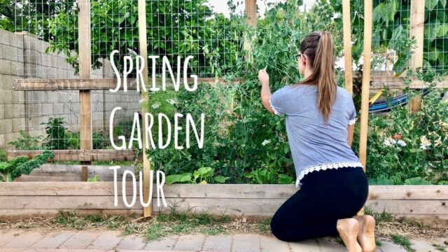 Spring Garden Tour while Quarantined – Phoenix, AZ