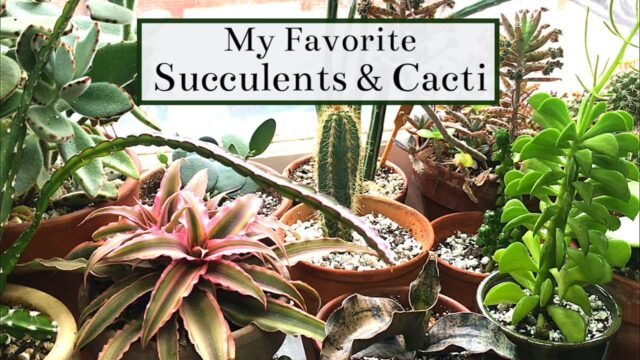 My Favorite Succulents & Cacti | 2019