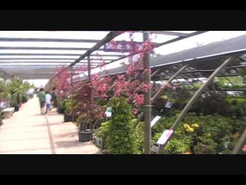 Tagawa Gardens Centennial Colorado  5280click SEO