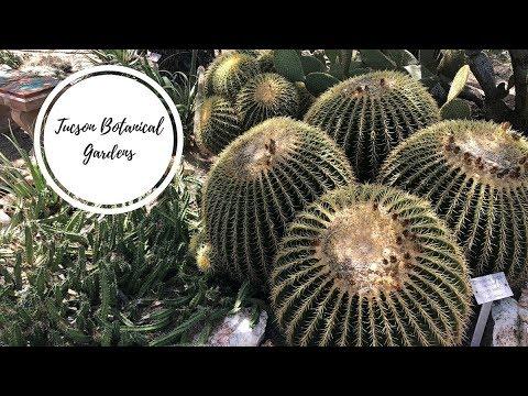 Tucson Botanical Gardens | road trippin'